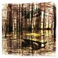 写真: The Bench in the Woods 10-6-12