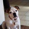 Hello Daisy 10-6-12