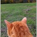 写真: Billy Looks at the Lake