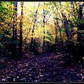 Yellow Woods 10-9-12