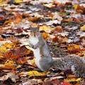 A Squirrel 10-21-12