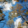 Looking Up... 10-21-12