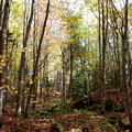 Wolfe's Neck Woods 10-21-12