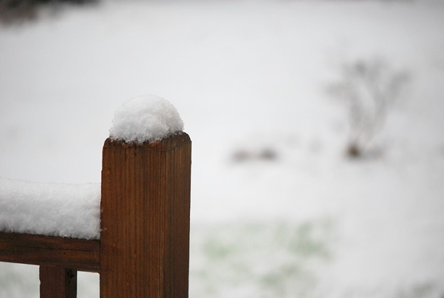 写真: First Snow of this Season 11-8-12