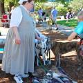 Greyhounds and a Volunteer