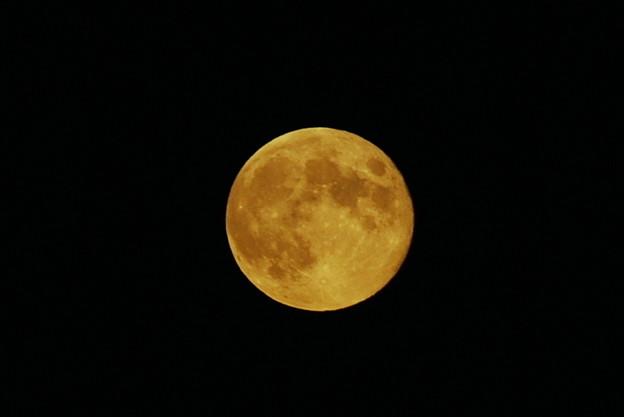 Harvest Moon 9-19-13