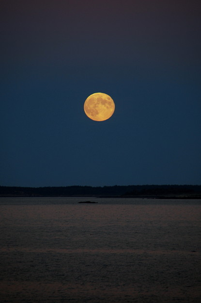 写真: Harvest Moon and the Ocean 9-19-13