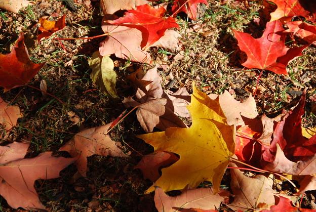 Fallen Leaves 10-19-13