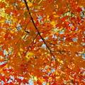 Red Orange Yellow Green 10-19-13