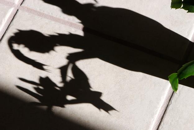 Photos: The Shadow 11-23-13