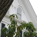 Photos: A Shrub and the House 1-18-14