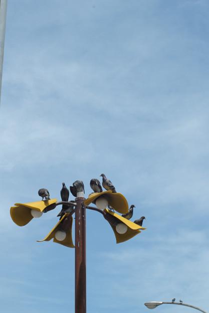 Photos: 鳥の景色 (6) 2012年 7月 涼しい?