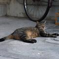 Photos: 猫の風景 (13) 2012年 9月