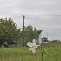 花の姿 (30) 2013年 9月