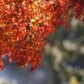 東公園紅葉