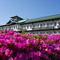 Photos: 蒲郡つつじ1