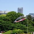 東京の空に泳ぐ