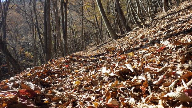 131123 奈良倉山への登り落ち葉サクサク