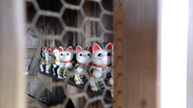 131130 招き猫右列@琴平神社