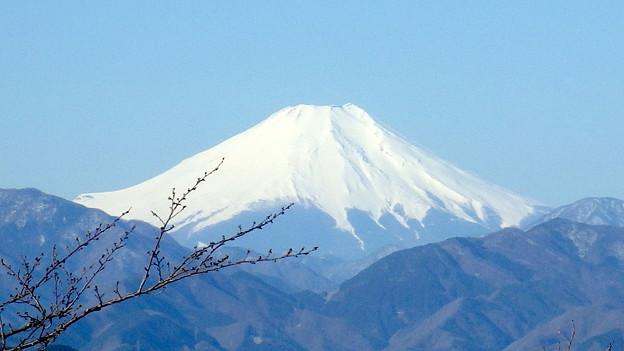 写真: 140323 高尾山頂からの富士山@741