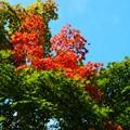 写真: 部分的紅葉
