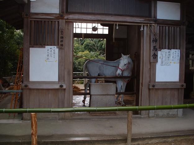 Photos: 2003_0118_140306AA 神馬 彌櫻號