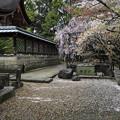Photos: 御香宮神社にて1