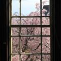 写真: レトロな京都府庁の窓から