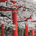 写真: 吉田神社 京都市左京区