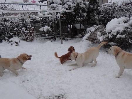 「雪やこんこ」
