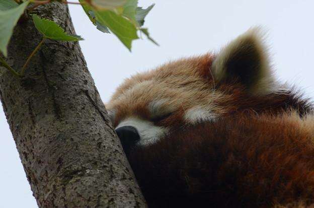 (__)。。ooOZZZZ 只今、安眠中 お静かに