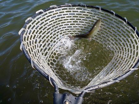 2013年営業再開直後9月の座間養魚場