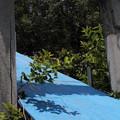 Photos: 青い影