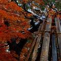 Photos: 冬囲い