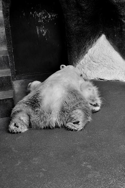 不惑店長の休日出勤 連続白熊モップ事件。