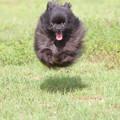 写真: 「犬玉」