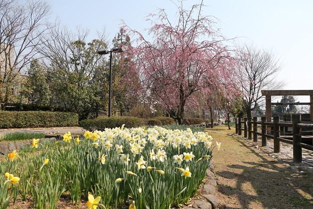 春景色 IMG_5739