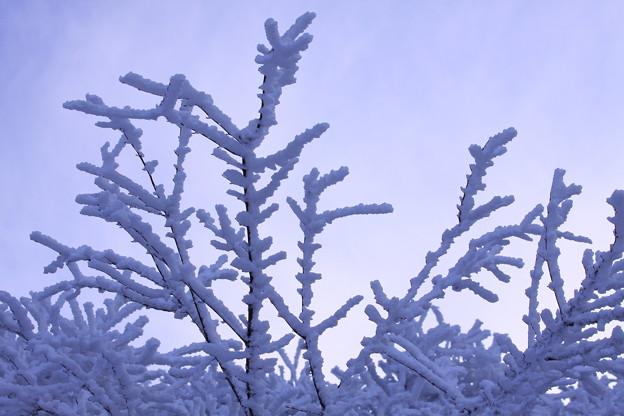 ☆樹氷蒼く