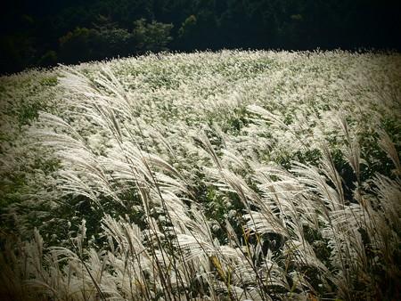 金色の草原