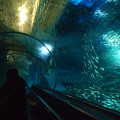 Photos: 水槽トンネル