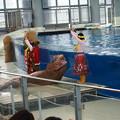 Photos: セイウチのフラダンス