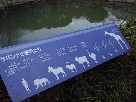 様々な生き物たち