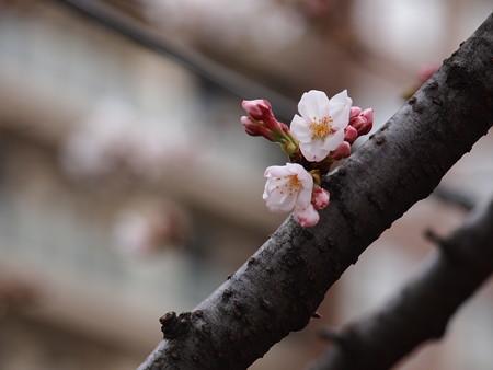 ちょこんと開花