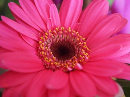 daisy lady
