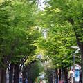 Photos: 横浜 イセザキモール