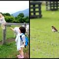 Photos: ヤギと子供