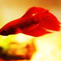 Photos: Battle Fish