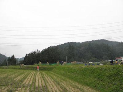 写真: 2013.10.19いなご