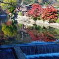 写真: 嵐山の紅葉