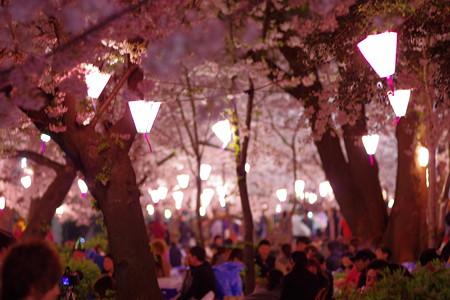 夜桜花見の風景